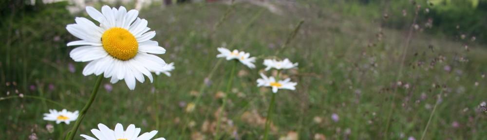 Herbár, bylinkáreň, popis rastlín